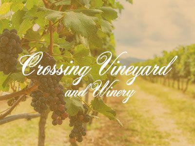 Crossing Vineyards and Winery – My Amazing Wine Tour