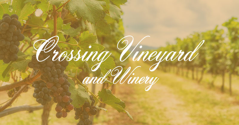 crossing vineyard and winery